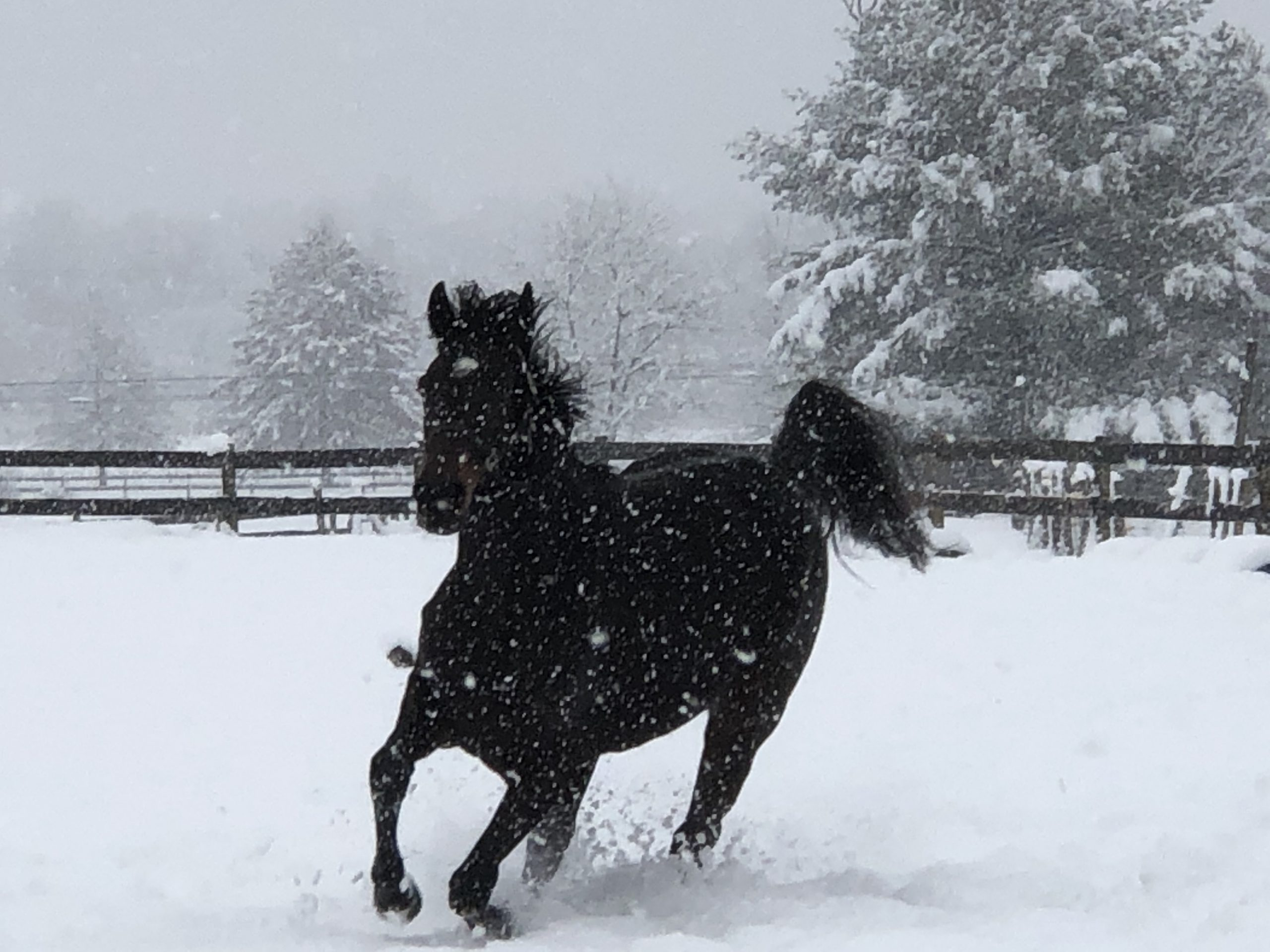 Safe Haven Thoroughbred Rescue