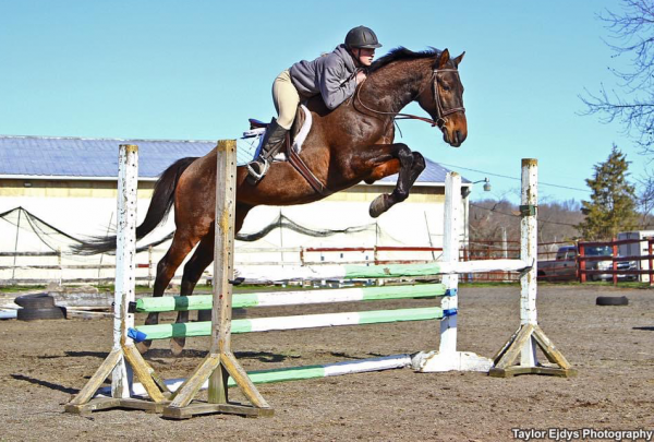 Horse jumping over fence inside riding ring with young female rider.